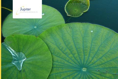 Jupiter Environmental Laboratories